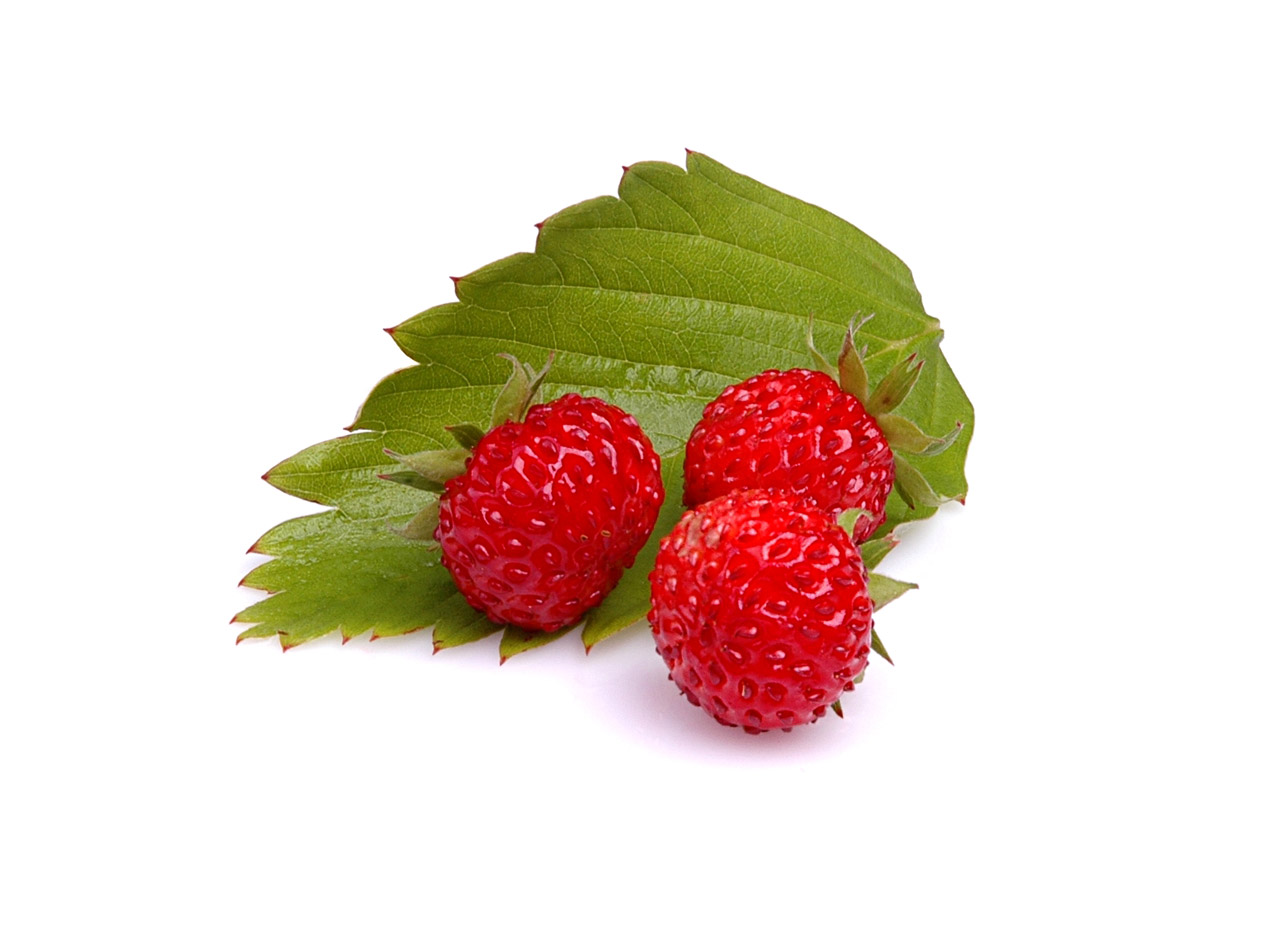 wild strawberries Wild strawberries has 877 ratings and 141 reviews jane said: oh, this is lovely 'wild strawberries' is the story of one aristocratic english family a.